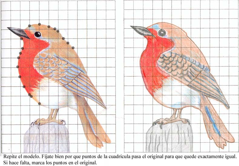 Como construir una casa nido para pjaros tattoo design bild - Como construir una casa ...